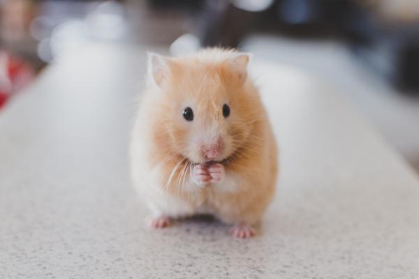Hamsterrad_Persoenlichkeitsentwicklung
